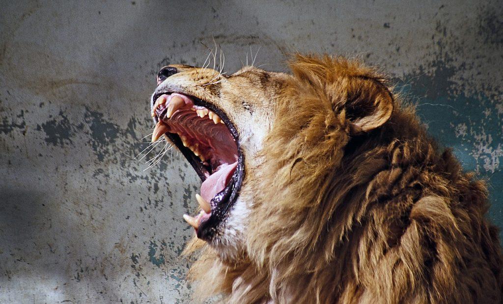 ライオンが吠えるようにブッダは教えを説いている